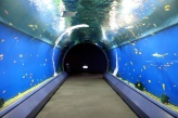 i've always wanted to walk through something like this.