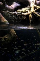 iguana on top. fishes underwater.