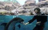 caretaker feeding a dolphin