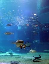 the biggest aquarium simulating the Pacific Ocean